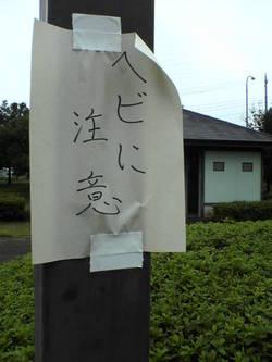 PAP_0724