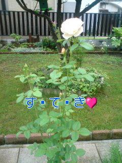 お庭拝け〜ん!