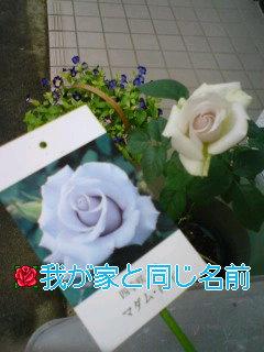咲きました〜